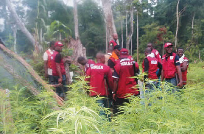 NDLEA Confiscates Over N17m Worth Of Illicit Drugs In Rivers
